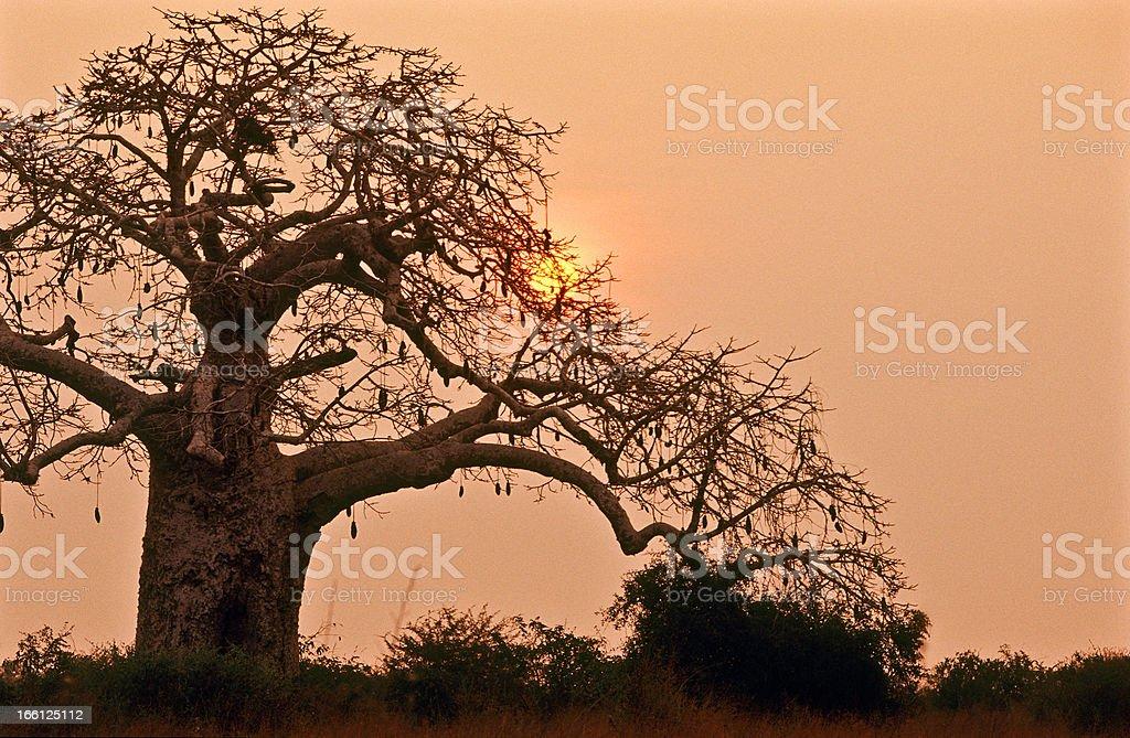 Angola, Bengo Province, Kissama National Park, sunset. stock photo