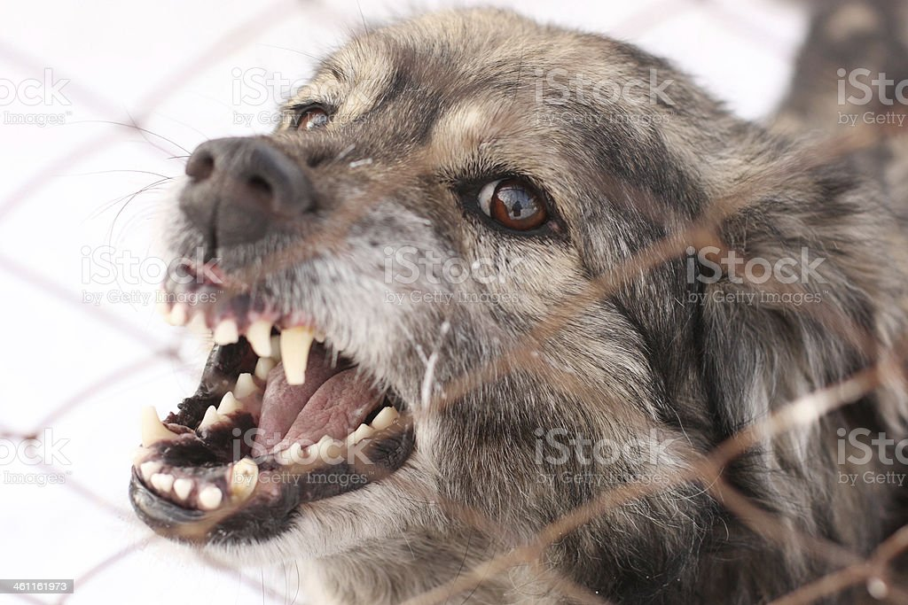 Angry barking dog in a steel cage stock photo