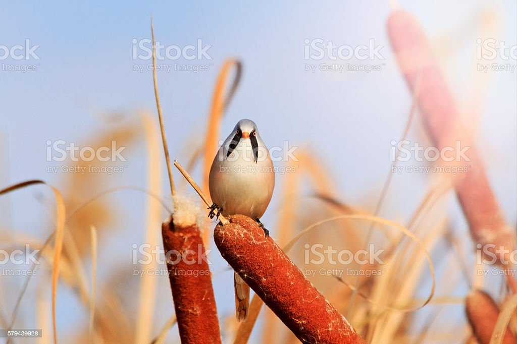 angry bird with a mustache  sunny hotspot stock photo