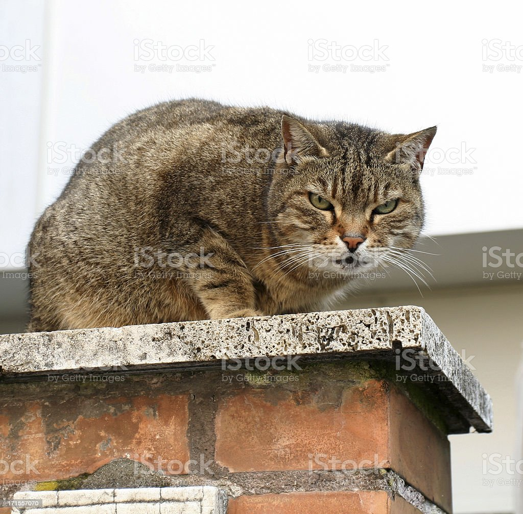 Angry cat in Rome stock photo