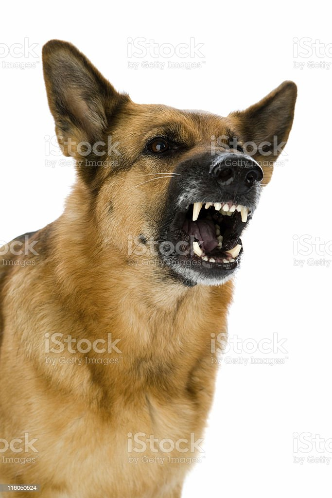 Angry dog stock photo