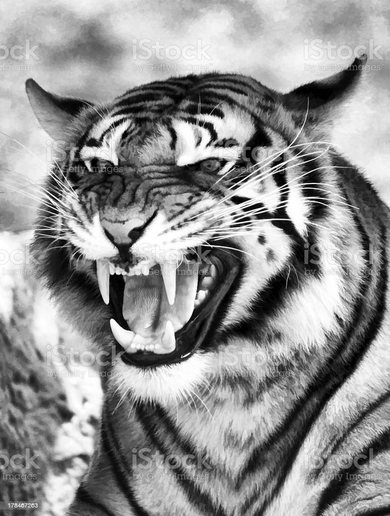Angry Face Tiger B&W stock photo