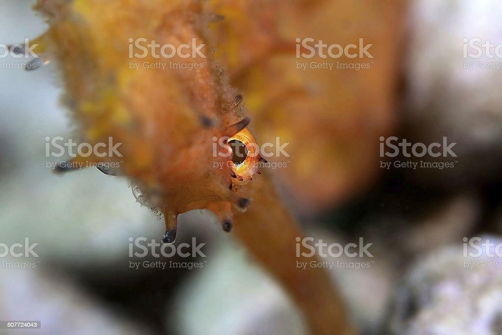 Angry seahorse stock photo