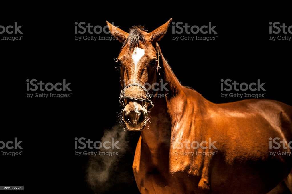 Angry stallion stock photo