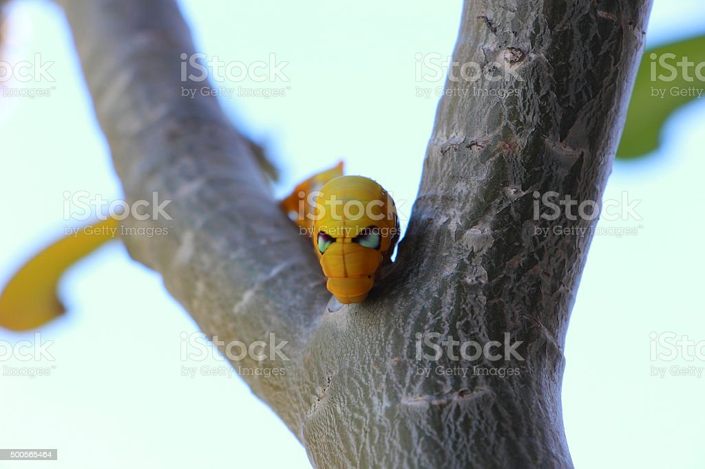 Angry yellow caterpillar insect stock photo