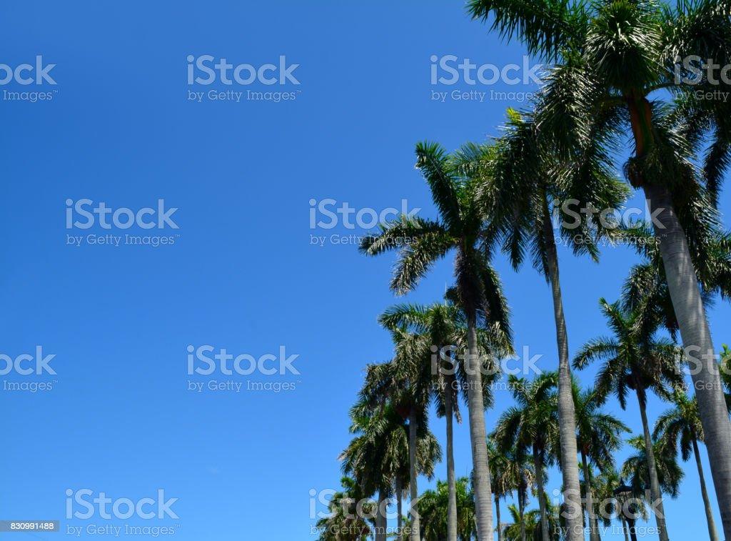 Angular Shot of Palm Tree Array stock photo