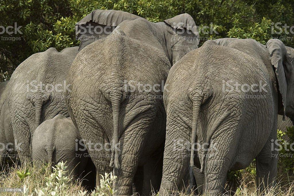 Animal Back royalty-free stock photo