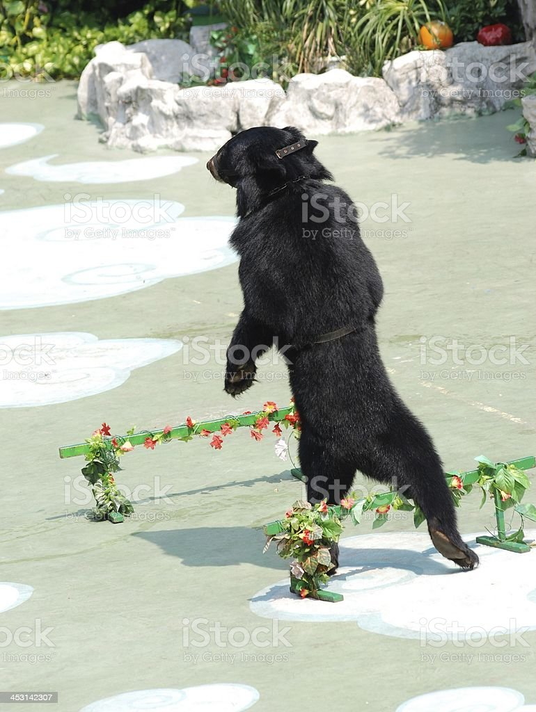 animal bear show stock photo