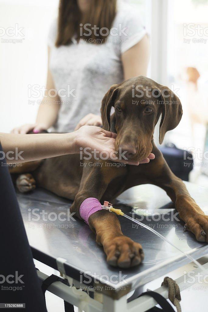 Animal care royalty-free stock photo