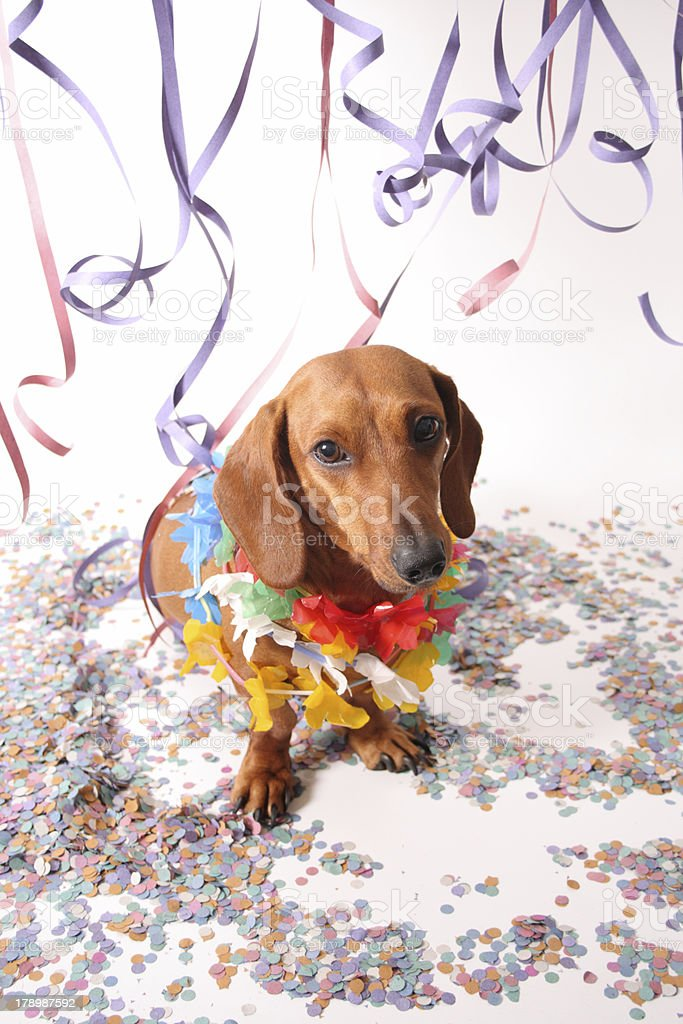 Animal carnival royalty-free stock photo