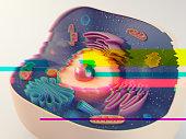 Animal cell glitch