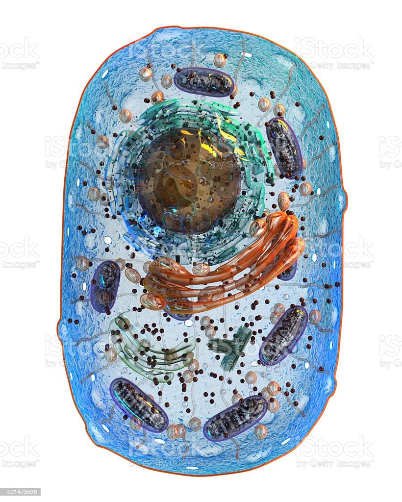 Animal cell. Internal structure. 3d illustration. stock photo