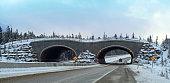 Animal crossing bridge on Trans Canada Highway- Banff National Park