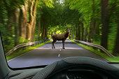 animal crossing - car windshield view to deer on street