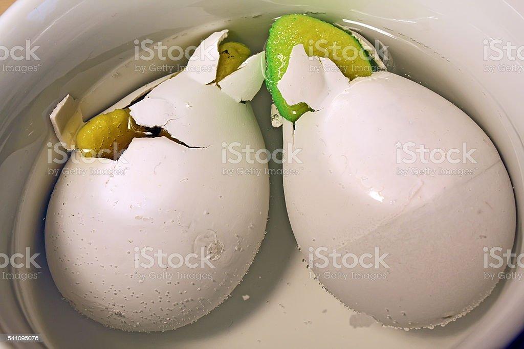 Animal eggs stock photo