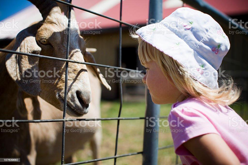 Animal Encounter royalty-free stock photo