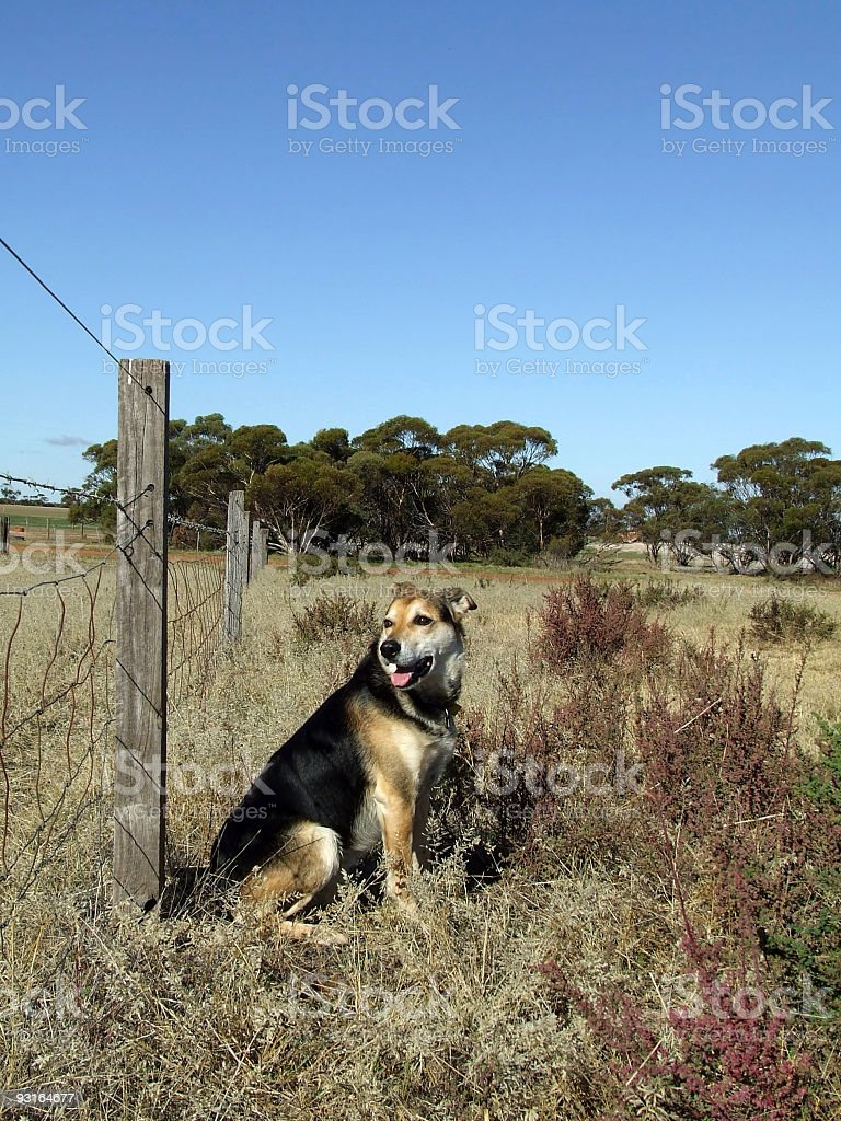 Animal - Farm dog royalty-free stock photo