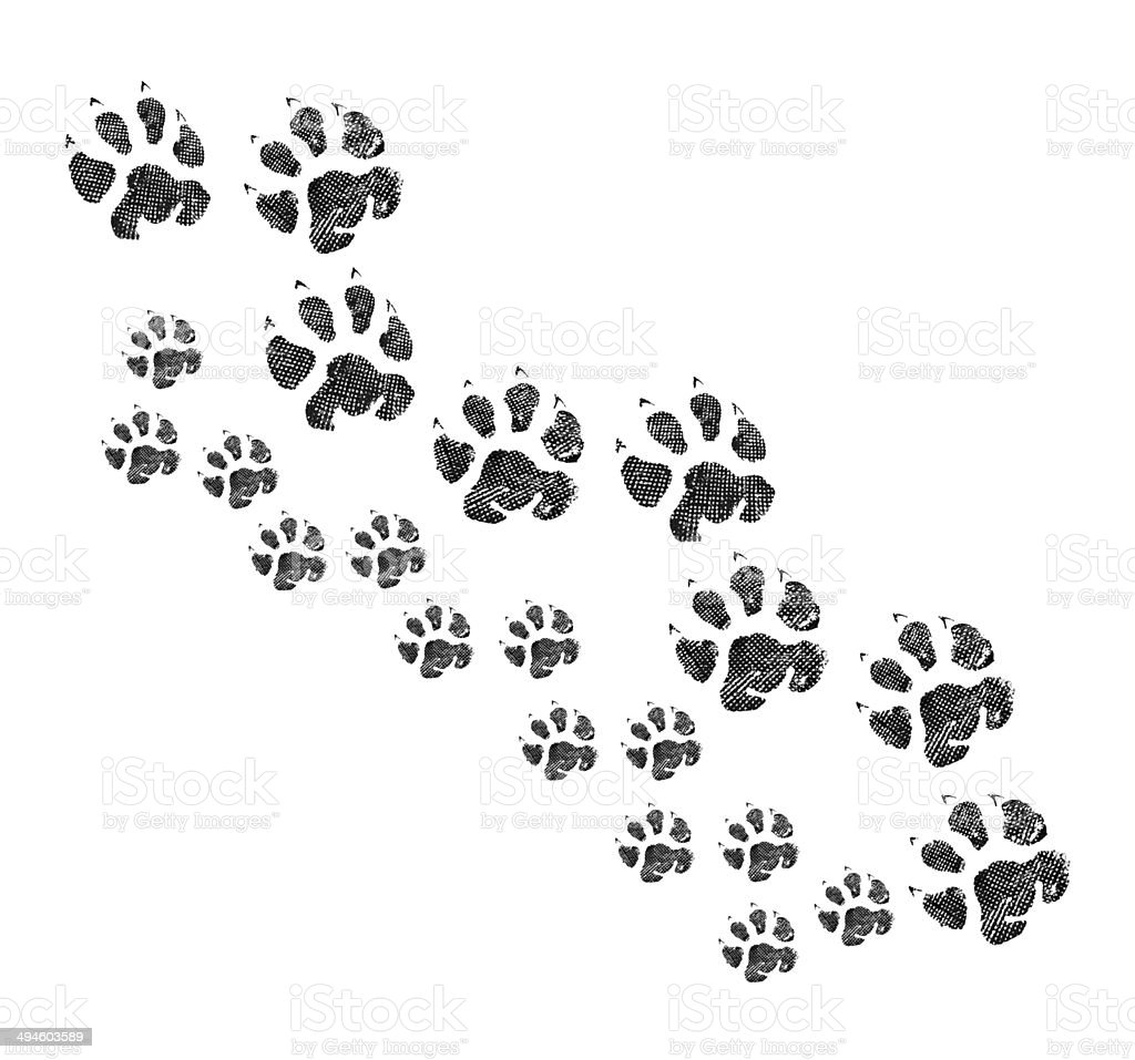 Animal footprint stock photo