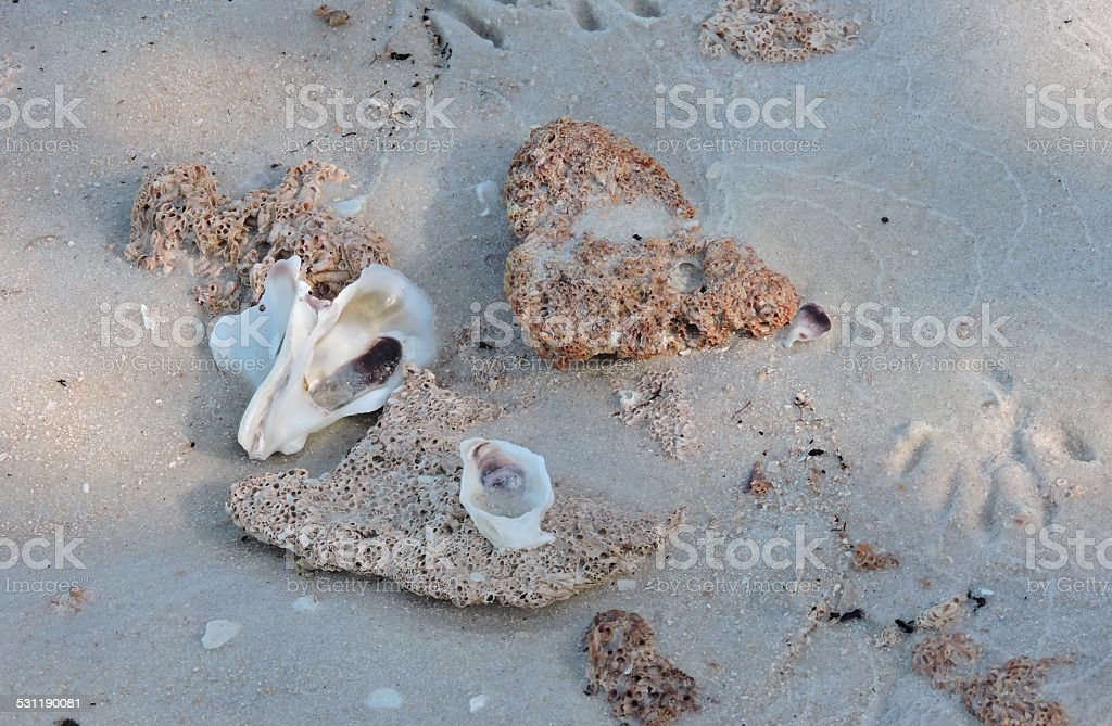 Animal Footprints and Shells on Beach stock photo