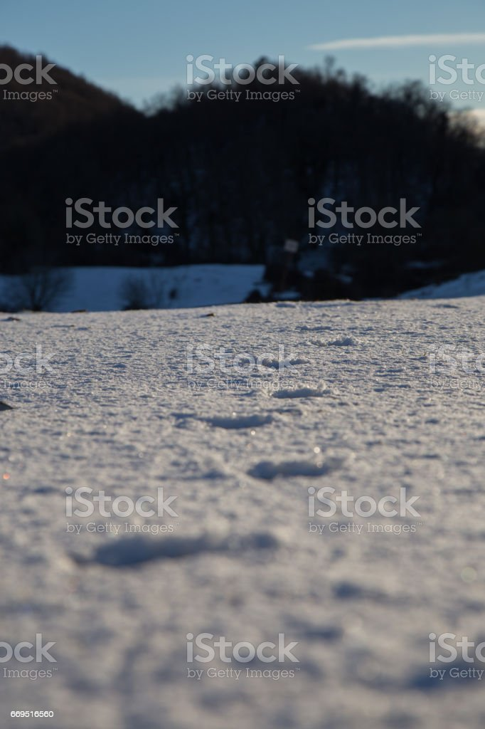 Animal footprints in the fresh snow. stock photo