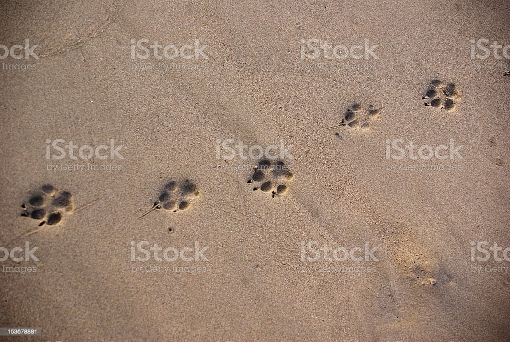 animal footprints in the sand background stock photo