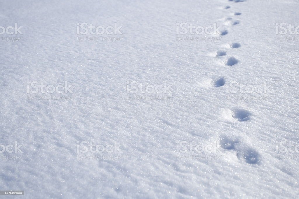 Animal footprints on snow stock photo