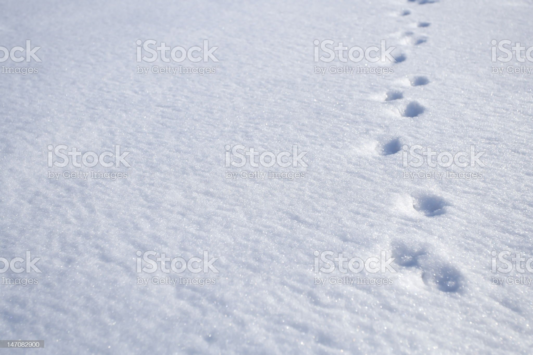 Animal footprints on snow royalty-free stock photo