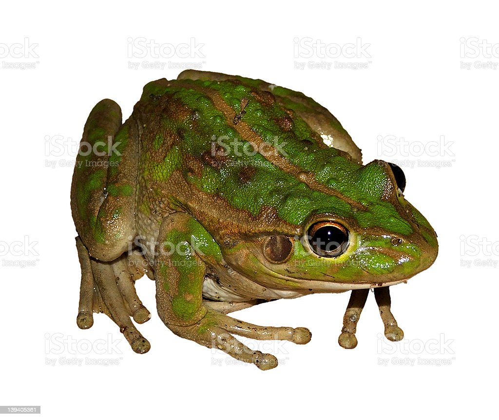 Animal - frog stock photo