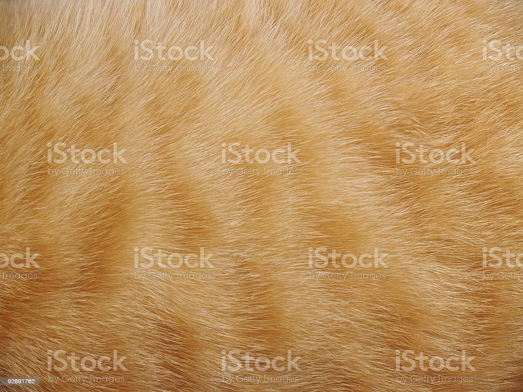 Animal Fur Background stock photo