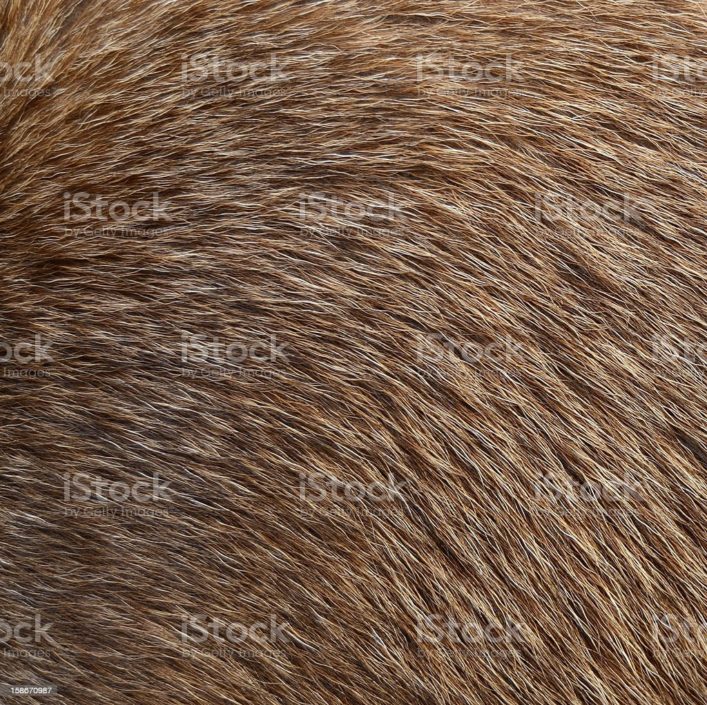 Animal Fur royalty-free stock photo