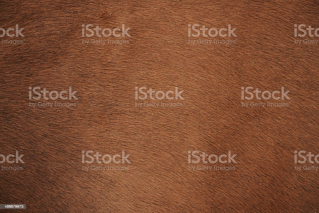 Animal fur stock photo