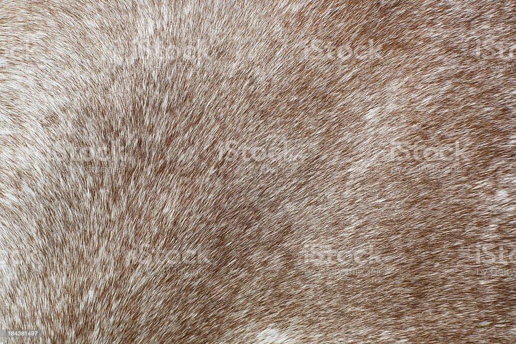 Animal fur texture royalty-free stock photo