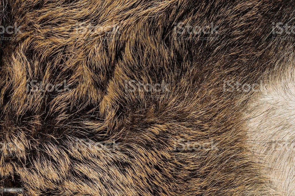 Animal hair stock photo