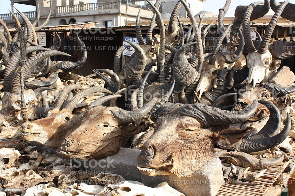Animal Heads at Akodessewa Voodoo Market, West Africa stock photo