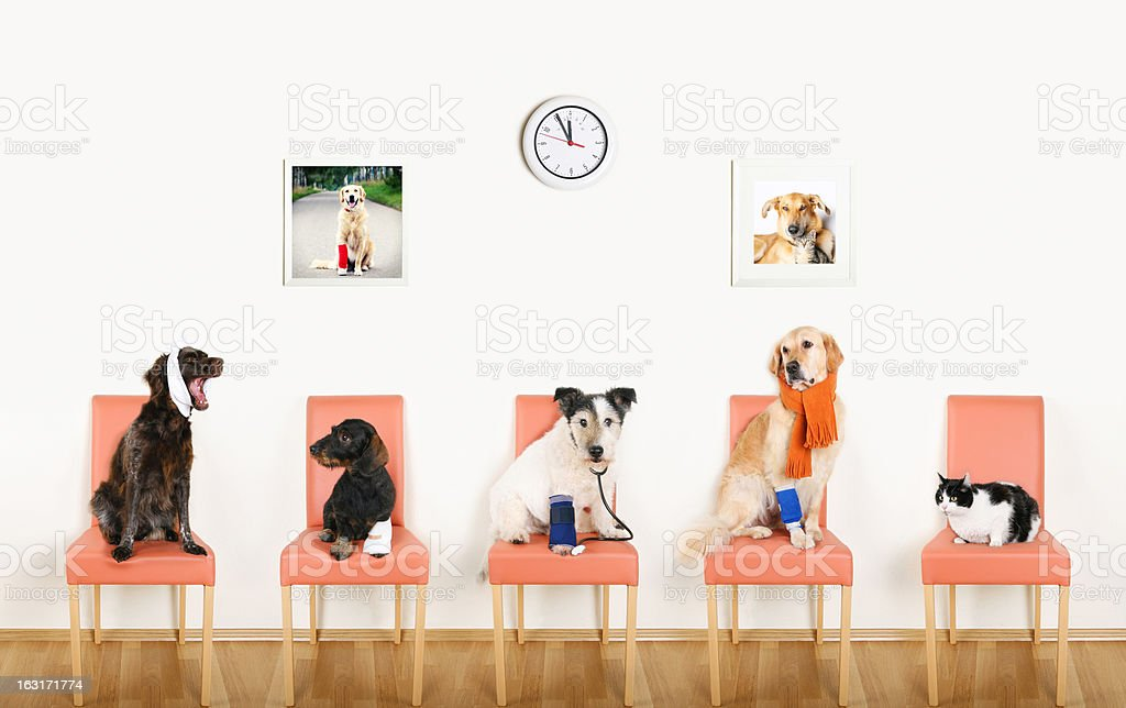 Animal Hospital stock photo