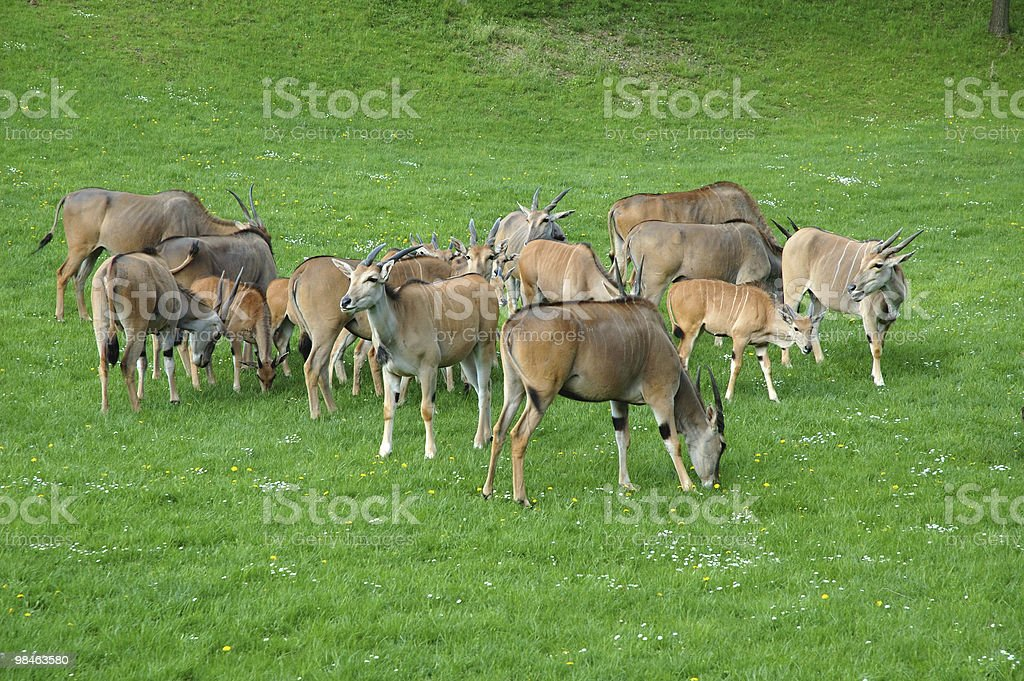 Animal husbandry stock photo