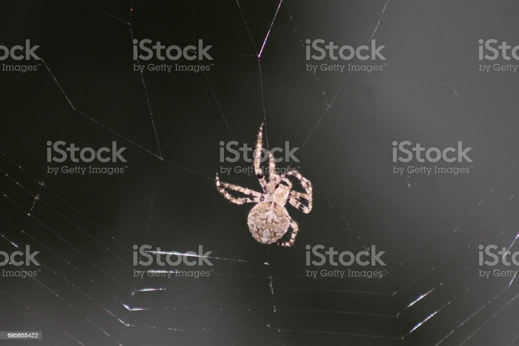 Spider an web