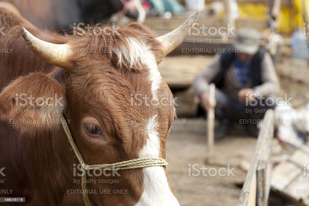 Animal Market in istanbul stock photo