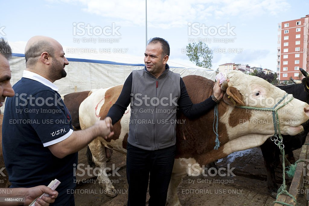 Animal Market in istanbul stock photo