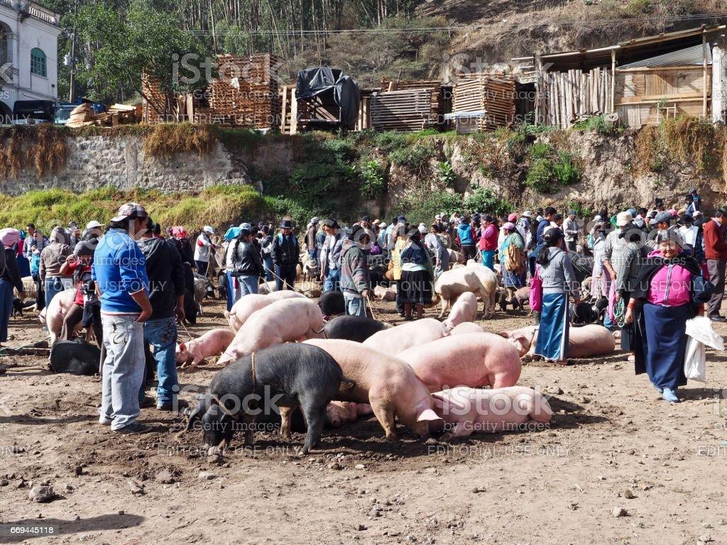 Animal market in Otavalo stock photo