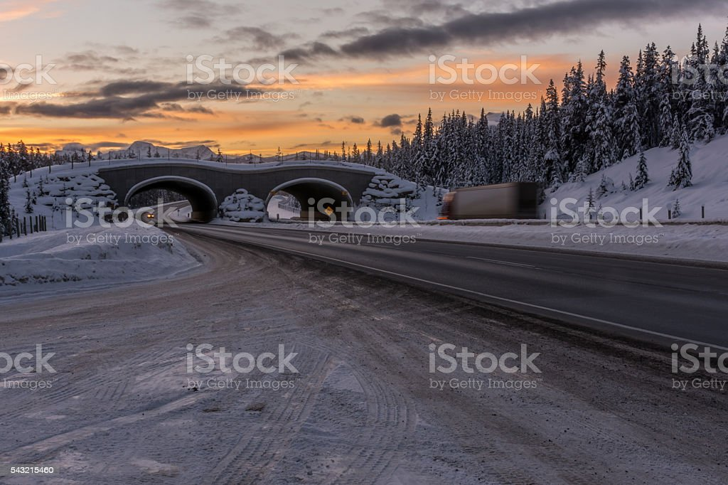 Animal Overpass on the Trans Canada Highway at Sunrise stock photo