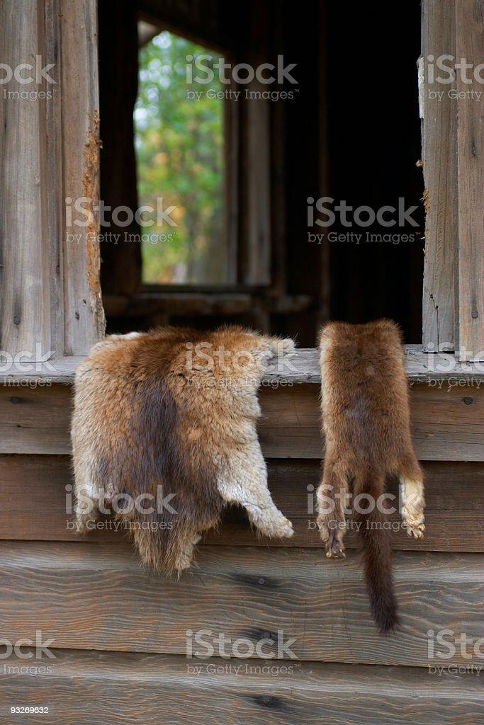 Animal Pelts royalty-free stock photo