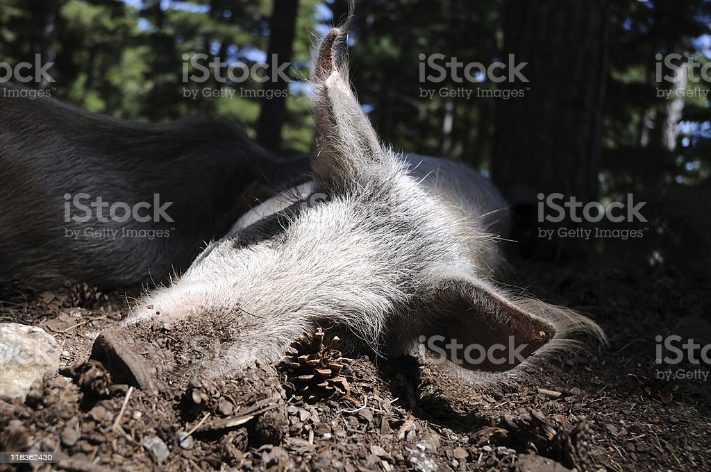 Animal stock photo