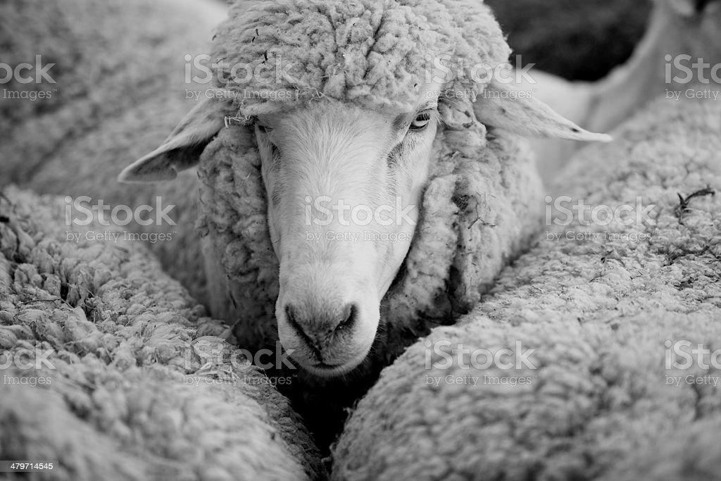 animal royalty-free stock photo
