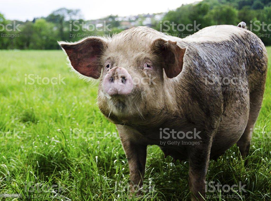 Animal protection stock photo