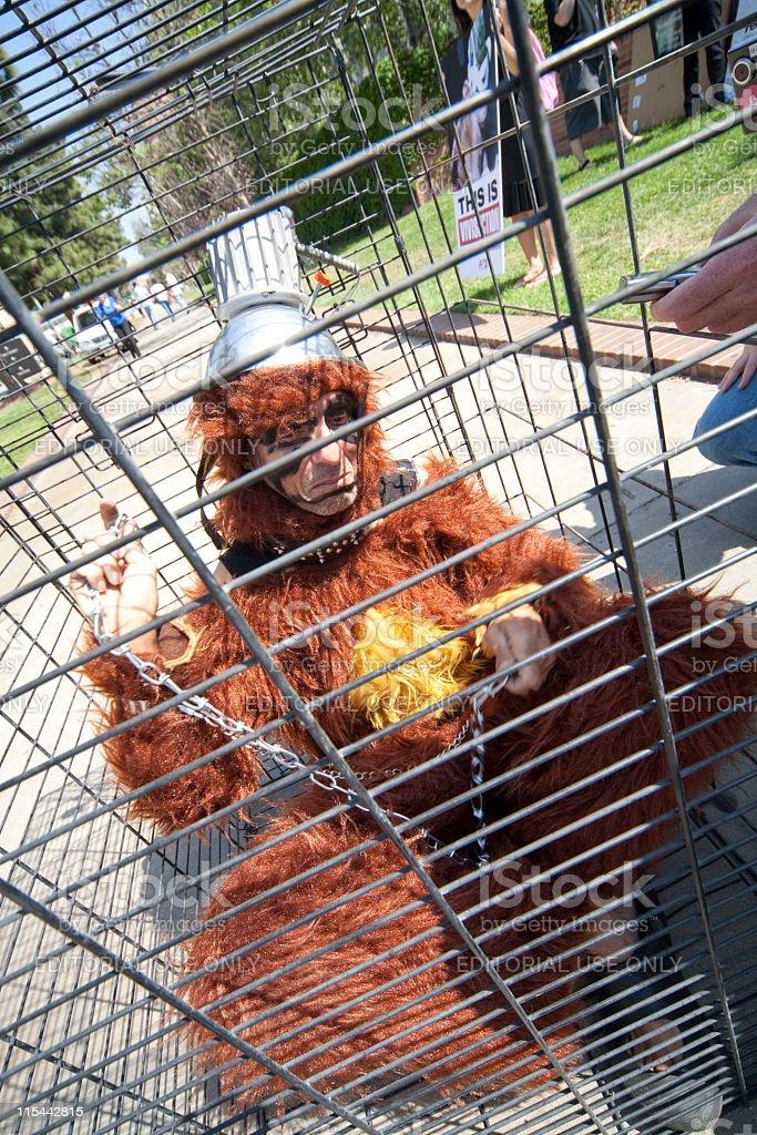 UCLA Animal Rights Activists stock photo