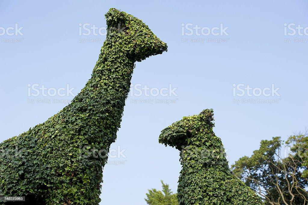 Animal Shaped Hedges royalty-free stock photo