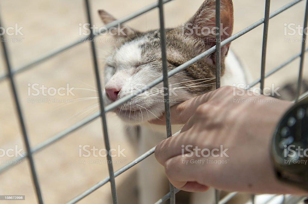 Animal shelter cat enjoying a good chin scratch stock photo