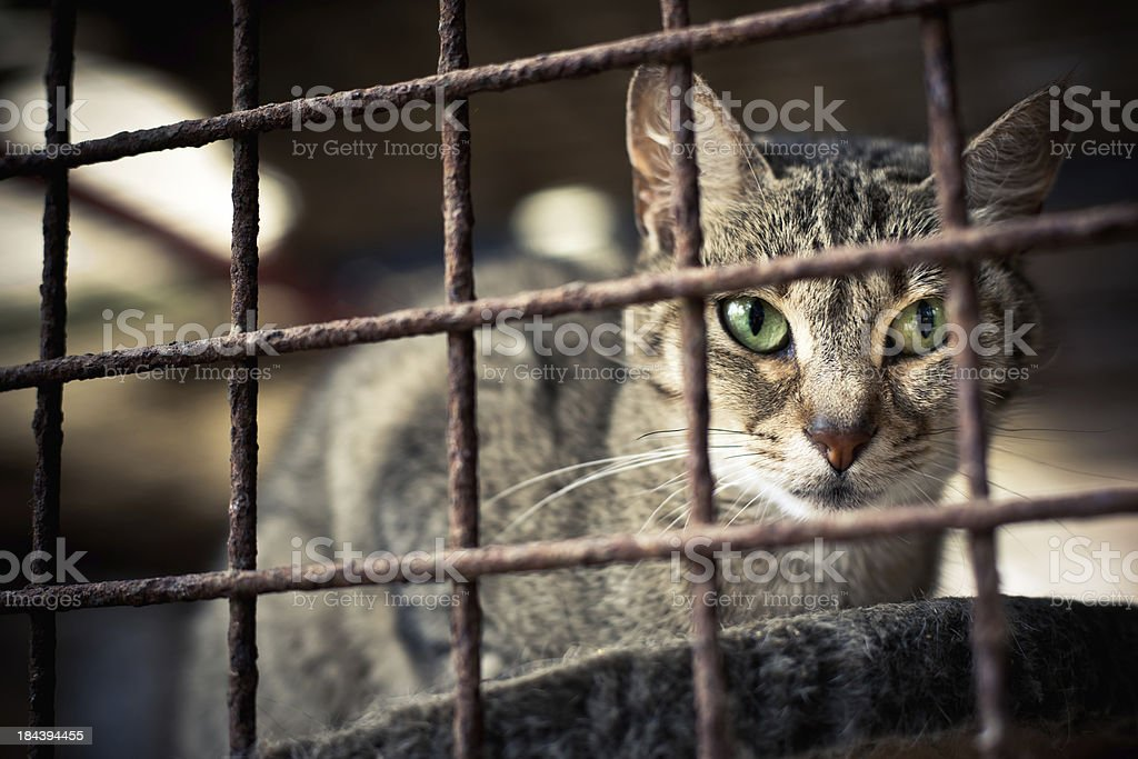 Animal Shelter Cat Portrait Series IV royalty-free stock photo