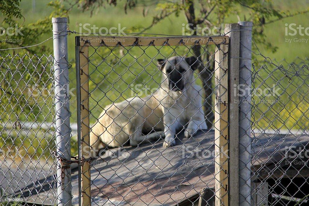 Animal Shelter Facesan royalty-free stock photo